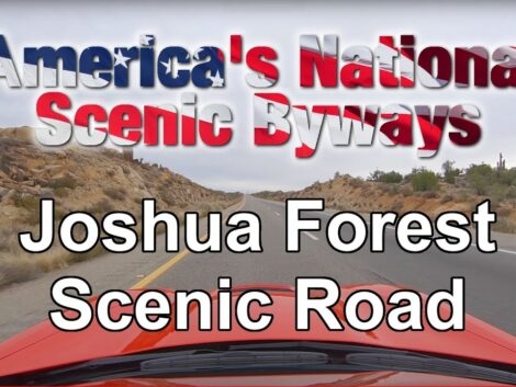 Joshua-Forest-Scenic-Road