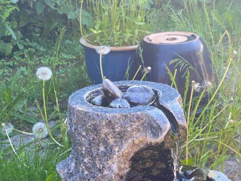 Bird-nest-in-flowerpot.-testing-tonights-stream-setup