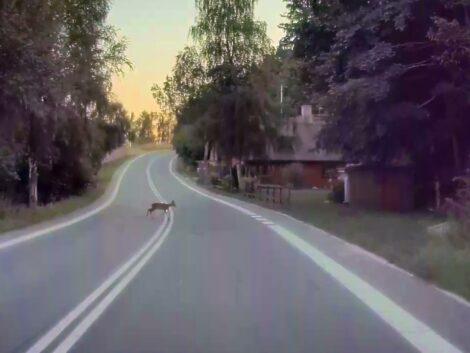 Teslacam-bambi-on-ice-dinner-escaped